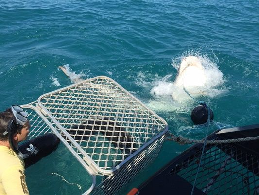 Along with some deep sea fishing Rob also tries the all new and adrenaline pumping experience: tiger shark cage diving...and rates it very highly