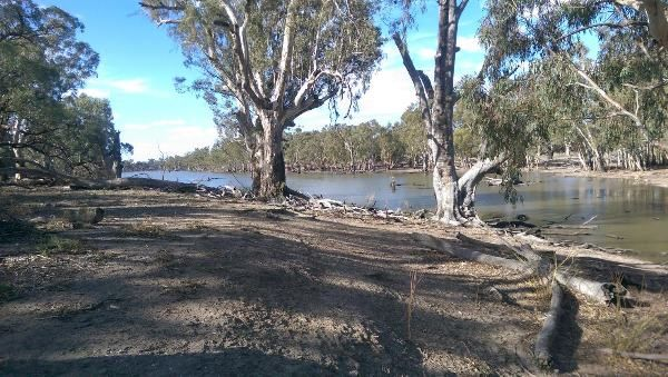 Wetland nursery project brings lower Murray back to life