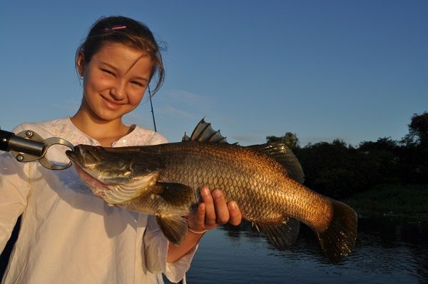 It's common to catch dozens of barra, this one was my daughter Caitlin's first