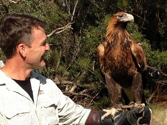 Holding a Wedge Tailed eagle at Raptor Domain was a highlight for Rob