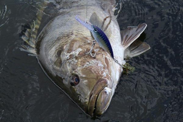 Fishing australia 2014 season finale episode 13 for Fish therapy near me